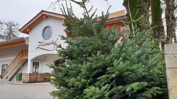 Wo Tannenbaum Kaufen.Weihnachtsbaum Kaufen Unbehandelte Tannenbäume Beim Zehmerhof Oder
