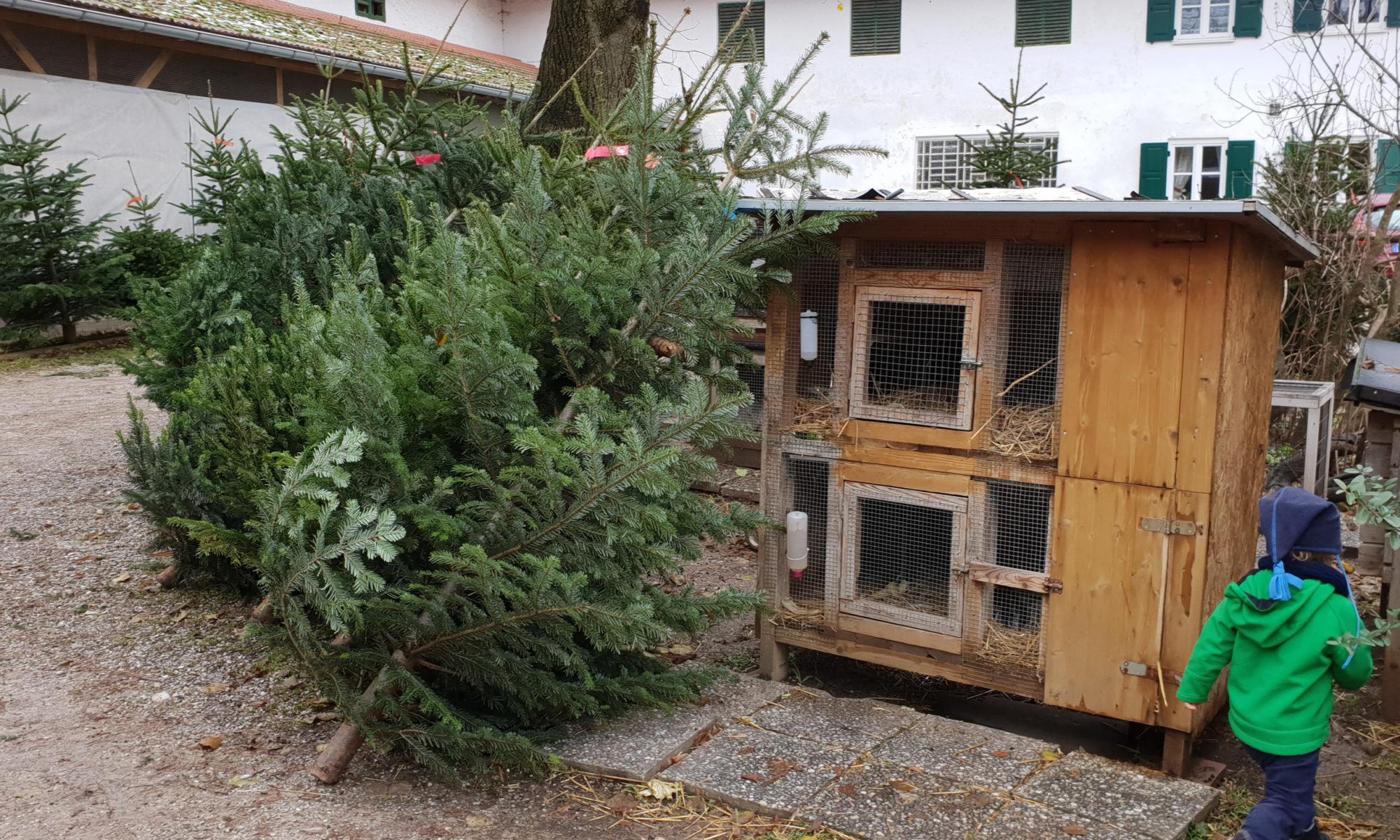 Wo Günstig Weihnachtsbaum Kaufen.Weihnachtsbaum Kaufen Unbehandelte Tannenbäume Beim Zehmerhof Oder